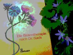 foto: buch über bachblüten-therapie